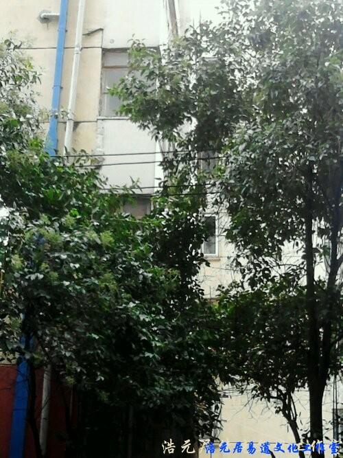 南京风水案例: 树影婆娑 化解形煞