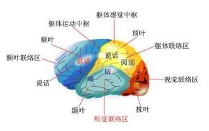 手面相知识 – 從生理學來驗證印堂部位的重要性