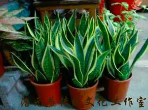 家里养了这些植物,至少多活10年!