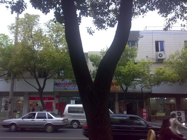 南京风水大师讲述官司树